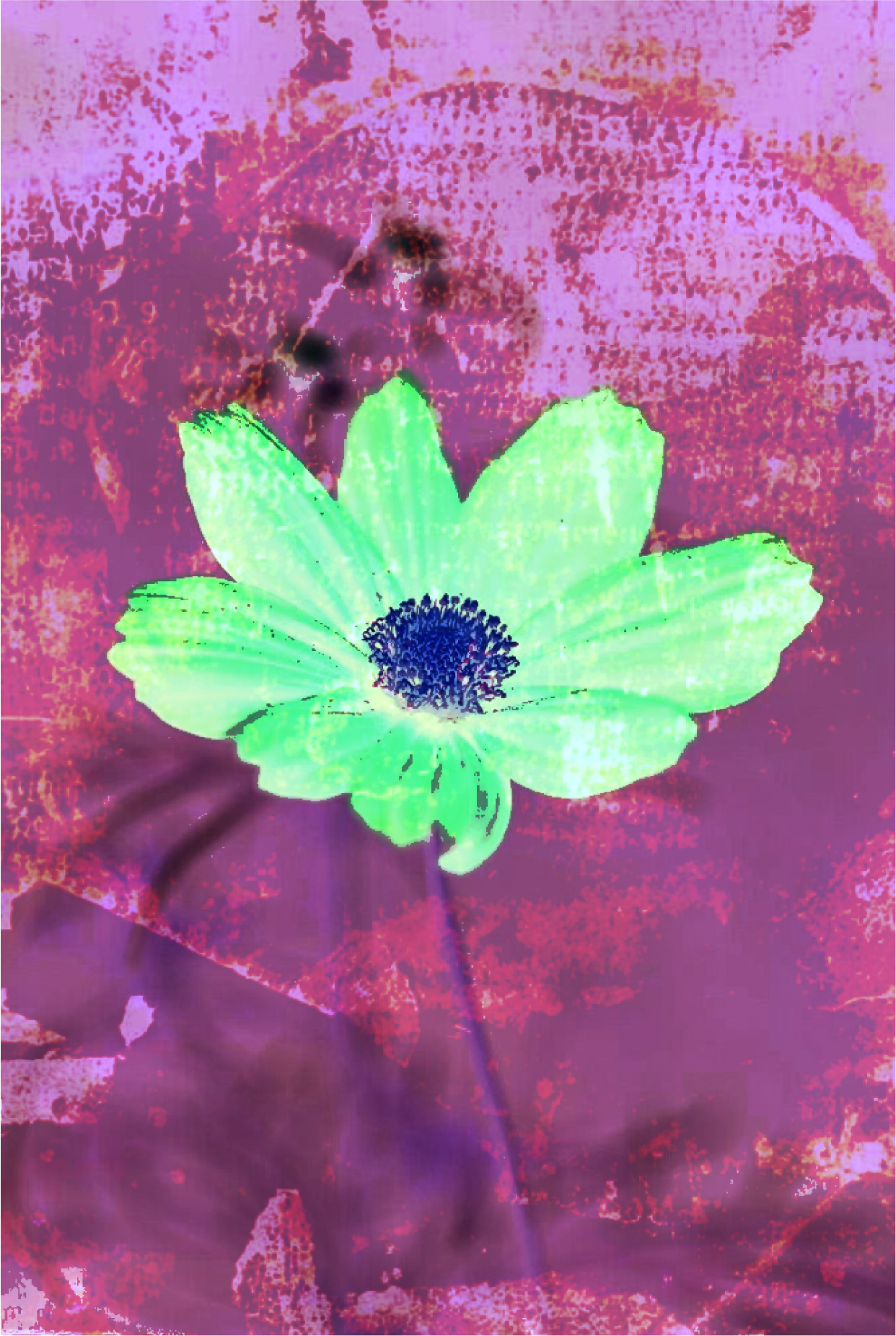 Flower 2918 digital photograph art by Ron Labryzz